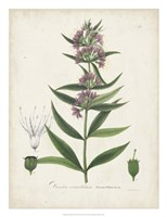 Flowering Flora IV Fine Art Print