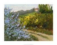 Rosemary by the Road Fine Art Print