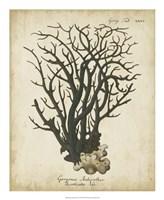 Esper Antique Coral I Fine Art Print