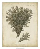 Esper Antique Coral III Fine Art Print