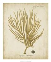 Esper Antique Coral IV Fine Art Print