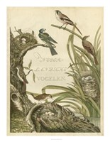 Sanctuary for Birds Fine Art Print