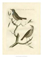Nozeman Birds II Fine Art Print