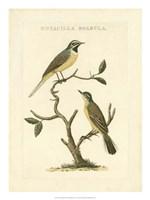 Nozeman Birds III Fine Art Print