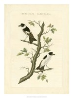 Nozeman Birds IV Fine Art Print