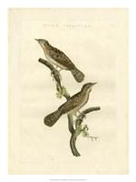 Nozeman Birds V Fine Art Print