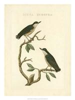 Nozeman Birds VI Fine Art Print