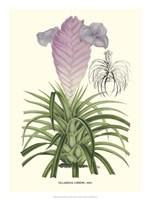 Lavender Orchids III Fine Art Print