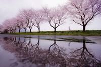 Rain of Spring Fine Art Print