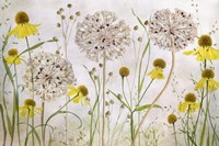 Alliums and Heleniums Fine Art Print
