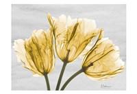 Sunny Trio Tulips Fine Art Print