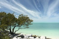 Key West Tree 1 Fine Art Print