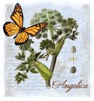 Angelica Herb Fine Art Print