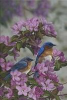 Bluebirds & Spring Blossoms Fine Art Print