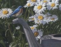 Bluebird Daisies Fine Art Print