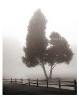 Cedar Tree and Fence Fine Art Print