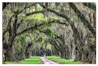 The Old South Fine Art Print