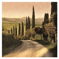 Country Lane, Tuscany Fine Art Print
