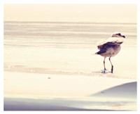 Bird at The Beach Fine Art Print