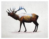 Rocky Mountain Elk Fine Art Print