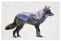 Rocky Mountain Grey Wolf Fine Art Print
