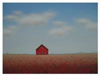 In a Poppy Field Fine Art Print