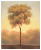 Solitude III Fine Art Print