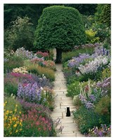 The Garden Cat Fine Art Print