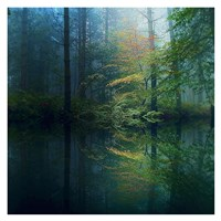 The Forest Fine Art Print