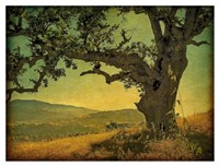 Blue Oak Hilltop Fine Art Print