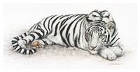 Siberian Tiger Fine Art Print