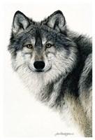 Silent Watch Fine Art Print