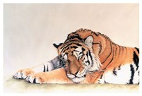 Sleeping Tiger Fine Art Print