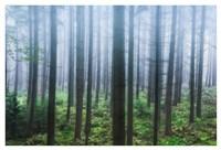 Misty Pines Fine Art Print