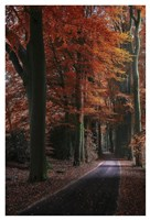Solse Gat Parkway Fine Art Print