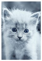 Blue Kitty Fine Art Print