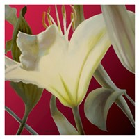 Lily Red Fine Art Print