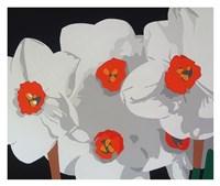 White Narcissus Fine Art Print
