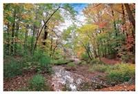 Autumn at Hopkins Pond Fine Art Print