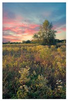 Grateful for the Day Fine Art Print