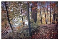 Season of Colors Fine Art Print