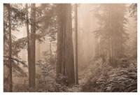 Enchanted Forest II Fine Art Print