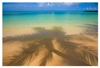 Palm Shadow Paradise Fine Art Print