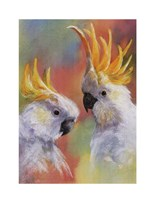 Sulphur-Crested Fine Art Print