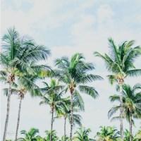 Southern Palms Fine Art Print