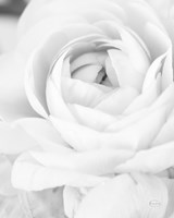 Black and White Petals III Fine Art Print