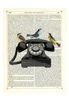 Birdcall Fine Art Print
