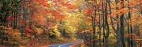 October Road Fine Art Print