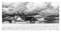 Five White Barns Fine Art Print