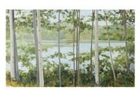 Birch Lake Fine Art Print
